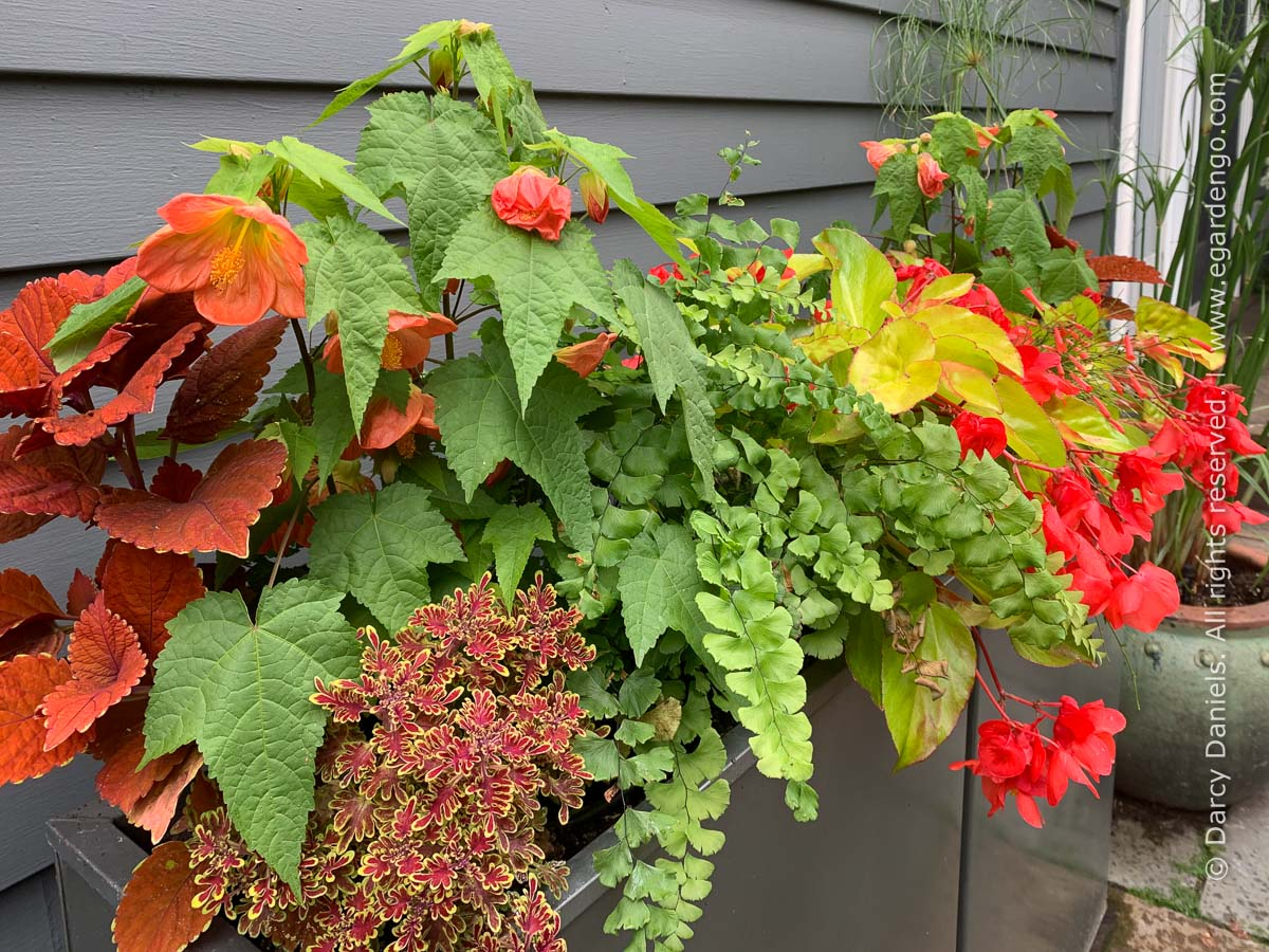 Plant Combination for Colorful Summer Container Combo in Orange and Yellow