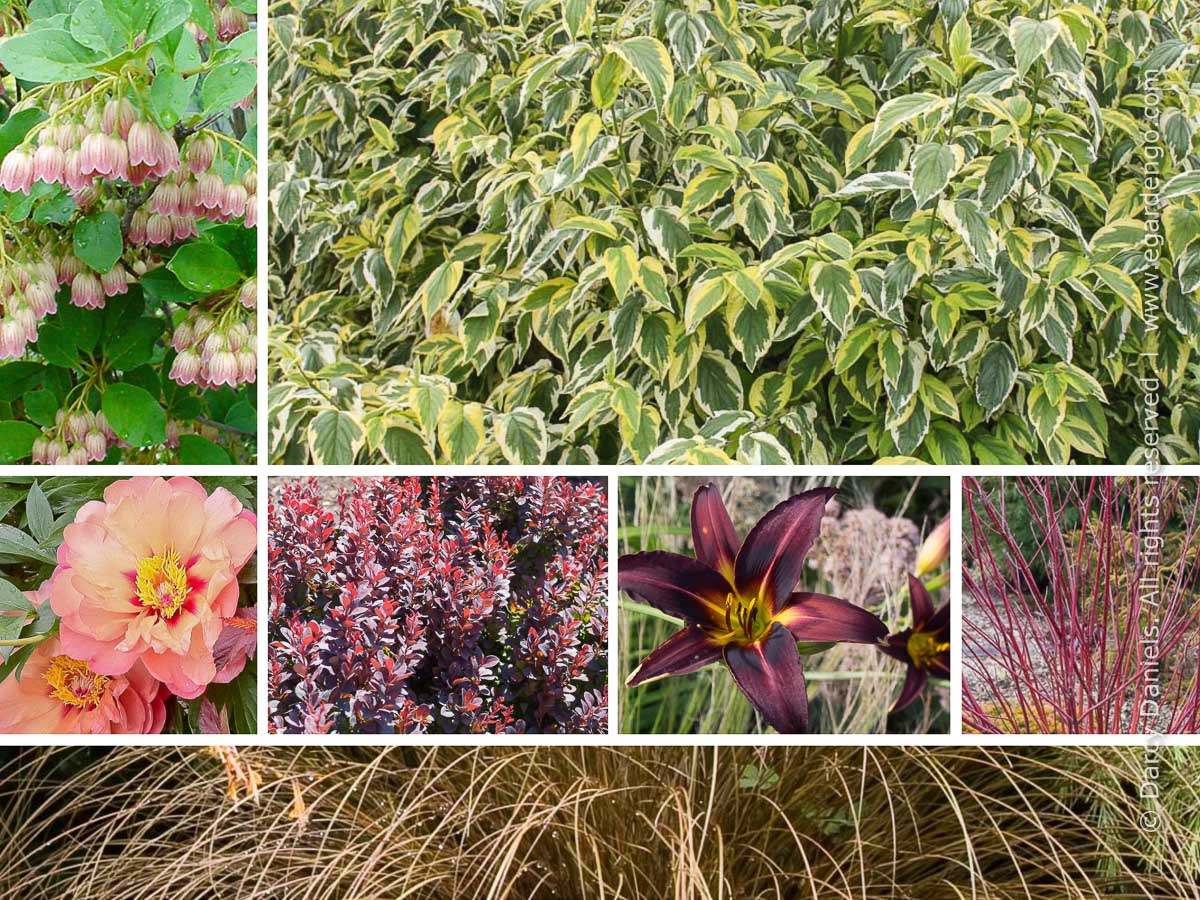 This plant combination for mixed border looks good for multiple seasons