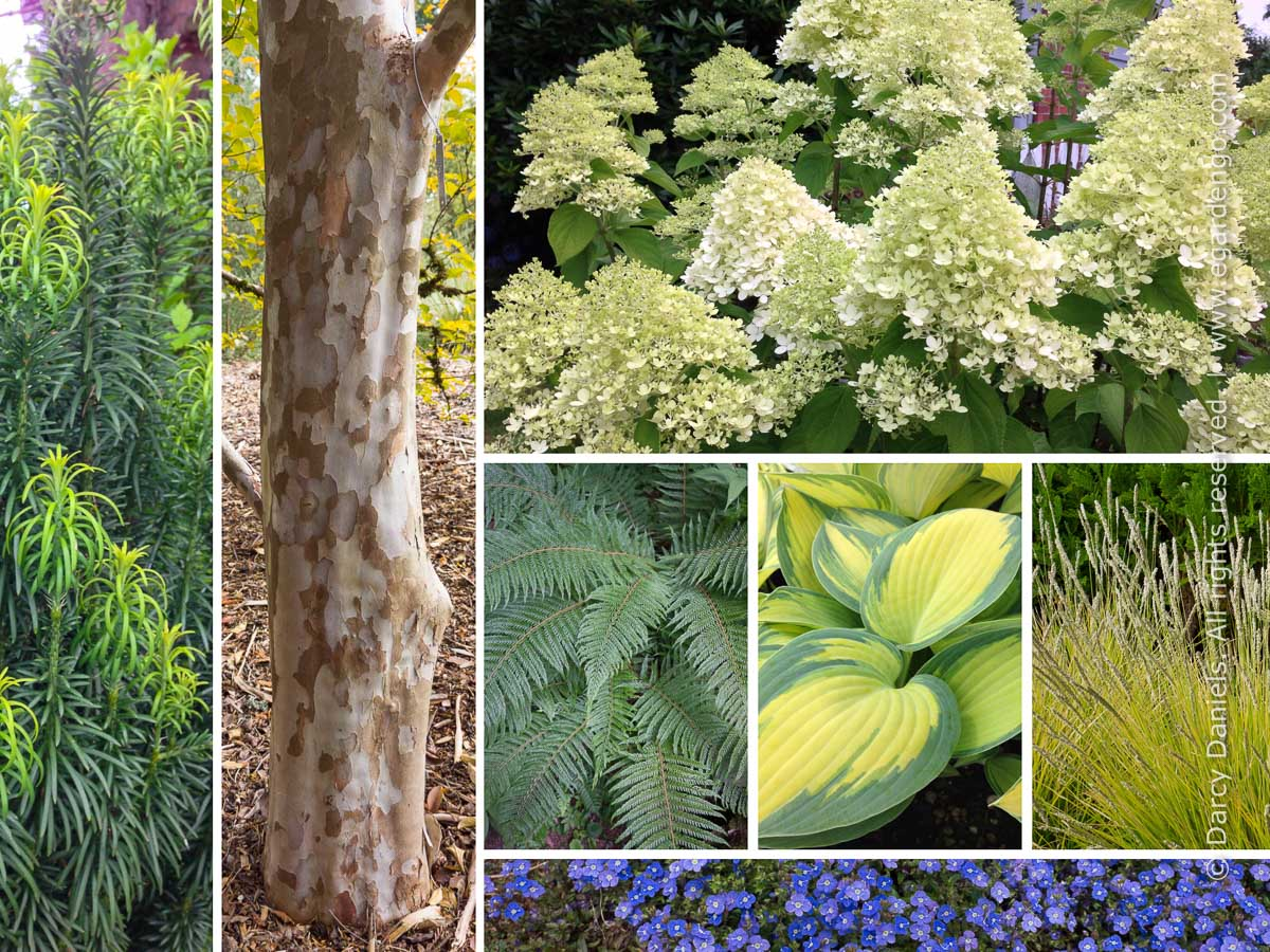 Plant Combination for Serene Woodland Garden